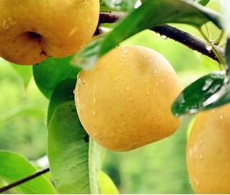 哪些水果清凉消毒,水果清凉消毒排行榜