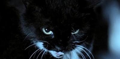 猫脸老太太事件 老太太死了复活这究竟是怎么回事